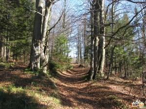 Niebieski szlak nad Halą Stokarka
