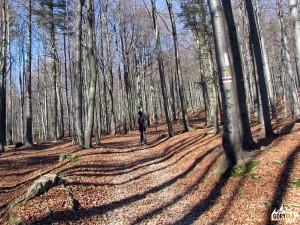 Szlak na Wierch nad Kamieniem