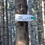 Zielony Szlak do Zawoi