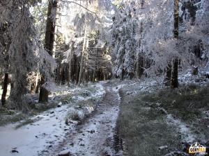 Ścieżka pod szczytem Przysłopu 1187 m
