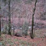 W dolinie potoku Łopuszna