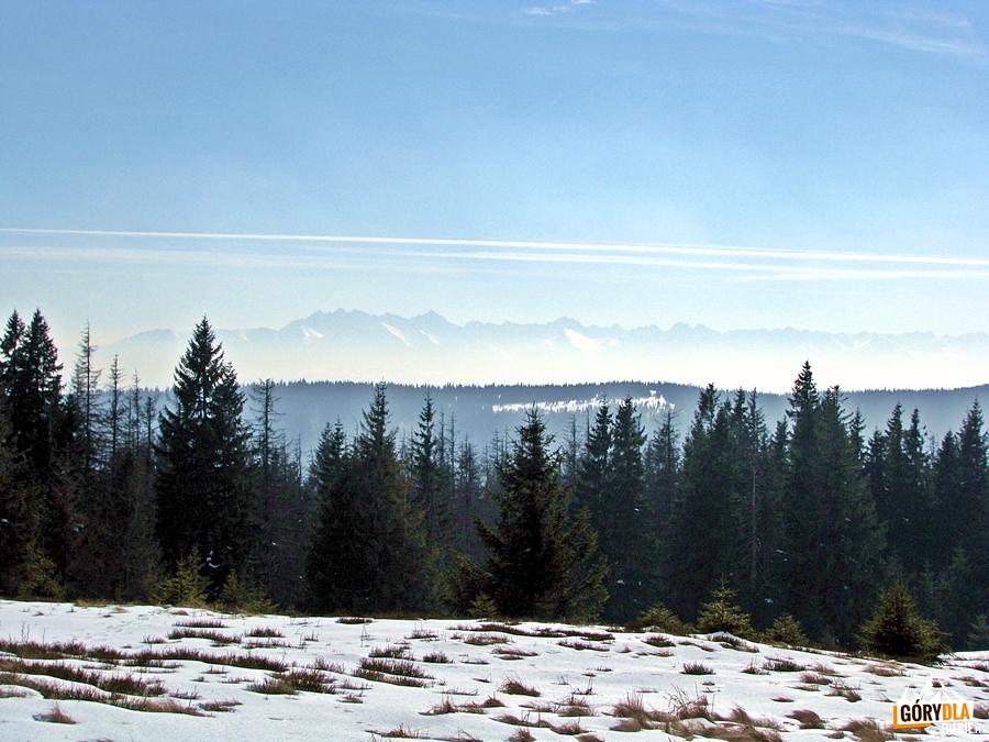 Panorama Tatr z Gorca Troszackiego