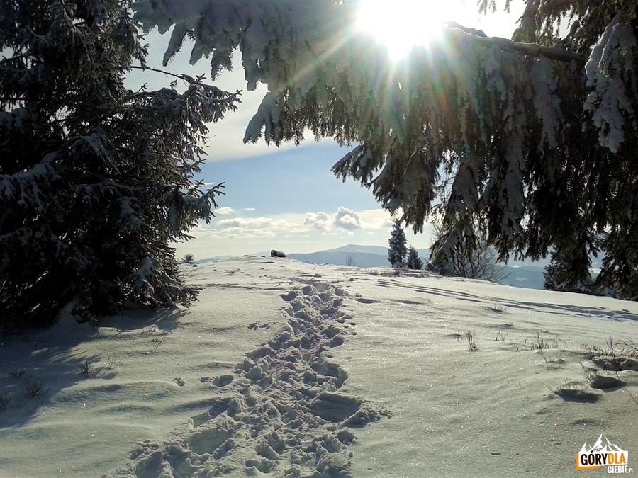 Pod szczytem Ćwilina 1072 m
