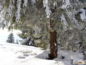 Żółte znaki szlaku z Maszany Dolnej na szczycie Ćwilina 1072 m