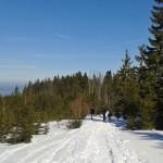 Czerwony szlak na Turbacz (nad Rozdzielem)