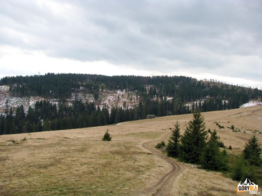 Hala Turbacz pod szczytem Turbacza 1310 m
