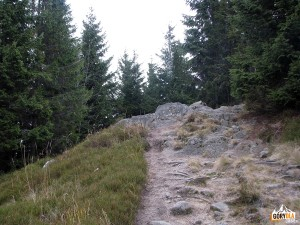 Szczyt Czoła Turbacza 1259 m