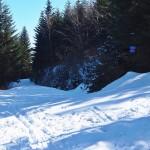 Skrzyzowanie zielonego szlaku z Chyszówek na Mogielicę z trasą narciarsko - rowerową
