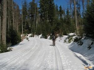 Narciarska trasa biegowa z Obidowej na Turbacz - podejście na grań
