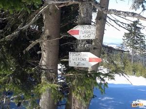 Narciarska trasa biegowa z Obidowej na Turbacz - nad Rozdzielem