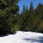 Narciarska trasa biegowa z Obidowej na Turbacz - Dolina Lepietnicy