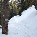 Niebieski szlak z Markowych Szczawin na Przełęcz Krowiarki