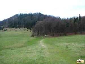 Zielony szlak pod szczytem Wysokiej 1050 m