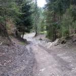 Zielony szlak na Wysoką 1050 m (nad Wąwozem Homole)
