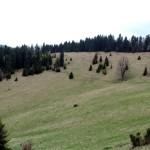 Niebieski szlak spod Wysokiej 1050 m na Przełęcz Rozdziela 803 m