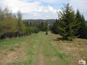 Niebieski szlak na szczycie Wierchliczki 955 m