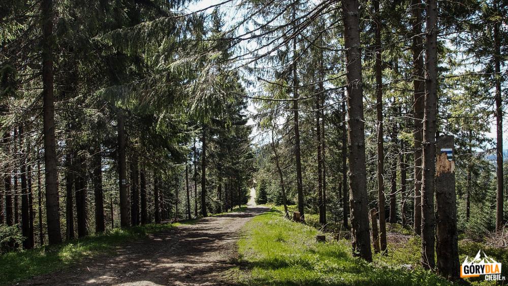 Zjeżdżamy rowerowym szlakiem niebieskim w kierunku Szczawnicy