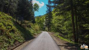 Trasa czarnego szlaku na Przehybę