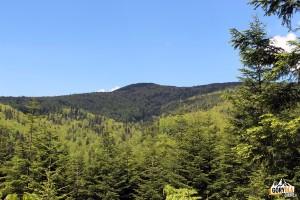 Szczyt Mogielicy widziany z trasy rowerowej