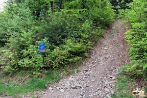 """Na trasie """"Mogielica"""" - skrzyżowanie z niebieskim szlakiem Jurków - Mogielica"""