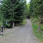 """Na trasie """"Mogielica"""" - skrzyżowanie z zielonym szlakiem Chyszówki - Mogielica"""