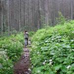 Zielony szlak w Dolinie Jaworowej