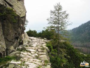 Na Magistrali Tatrzańskiej u wylotu Doliny Staroleśnej (słow. Veľká Studená dolina)