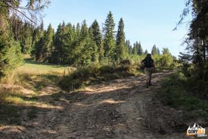 Leśna droga pod Ostrą Górą (793 m)