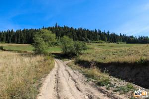Żółty szlak skręca w kierunku Przełęczy Przesła