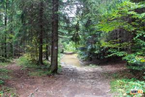 """Czarny szlak prowadzący wzdłuż """"Bagien Łopieńskich"""" w rejonie Łopienia Środkowego"""