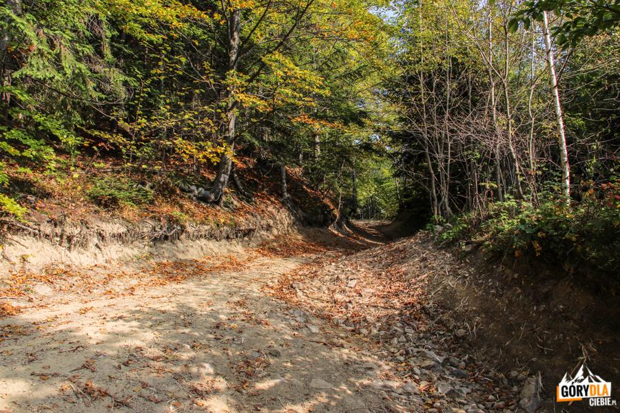 Zielony szlak z Przełęczy Rydza Śmigłego na Łopień
