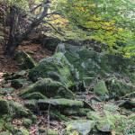 Wychodnie skalne na Łopieniu