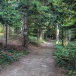 Droga Z Myconiówki na szczyt Łopienia