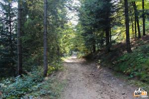Zejście żółtym szlakiem rowerowym i narciarstwa biegowego z Łopienia