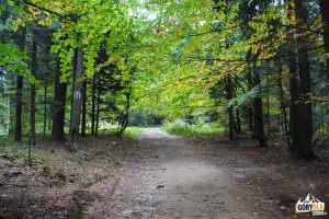 Zielony szlak na Suchą Polanę, czerwony na Lubomir