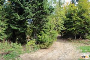 Zejście niebieskim szlakiem z Lubonia Wielkiego do Rabki - Zaryte