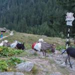 Zaopatrzenie schroniska Cabana Valea Sâmbetei