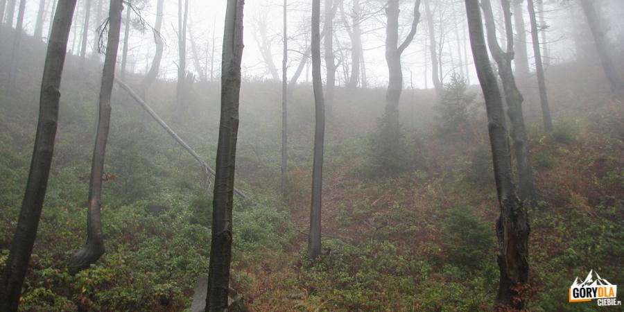 Kociołek tuż podgranią Pieżguli (1032 m).