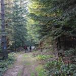 Niebieski szlak na Przełęcz Małastowską