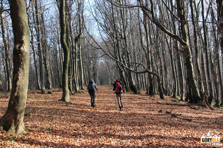 W drodze na Beskidek (Beskid Niski)