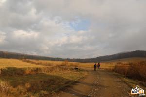 Żółty szlak prowadzący do Radocyny (Beskid NIski)