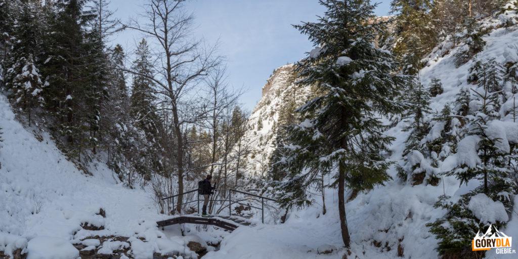 Mostki na potoku Kamionka w Wąwozie Homole
