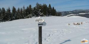 Znaki kierujące do Jaworek (po wyjsciu z Wąwozu Homole)