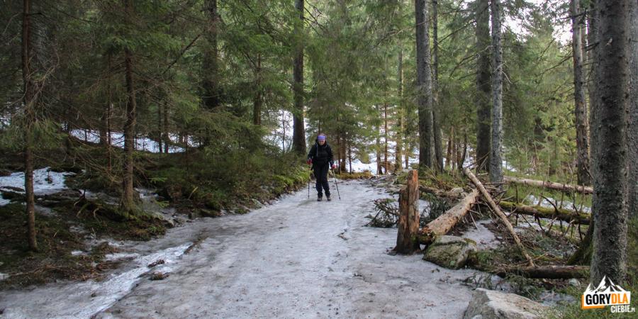 Zalodzony szlak w Dolinie Roztoki