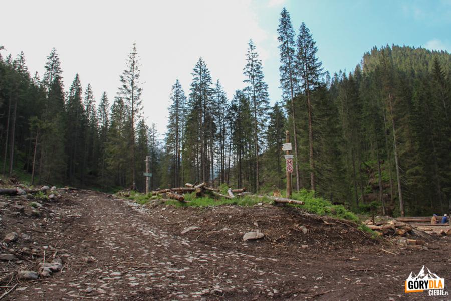 Rozwidlenie Doliny Chochołowskiej, w lewo do Doliny Starorobociańskiej