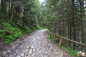 Kamienisty odcinek drogi w Dolinie Chochołowskiej