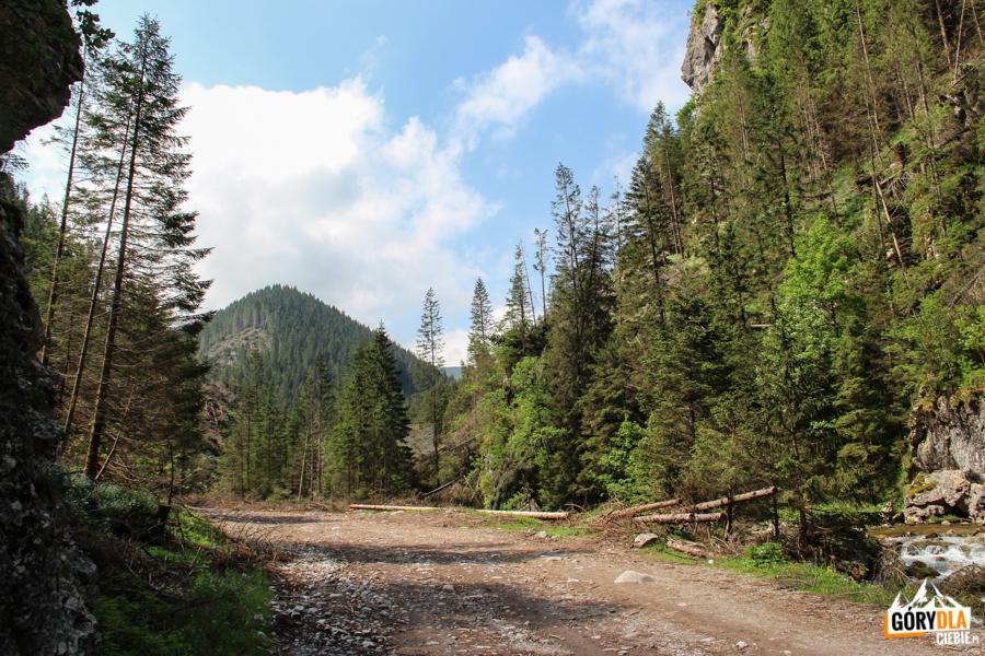 Wielki Kopieniec (1257 m) widziany z dna Doliny Chochołowskiej