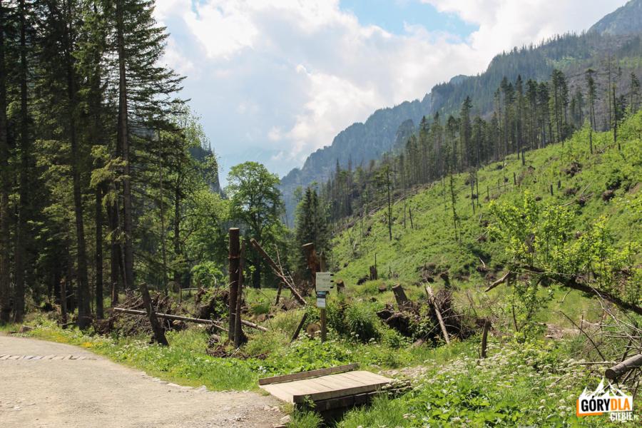"""Dolina Kościeliska - skrzyżowanie ze """"Ścieżką nad Reglami"""""""
