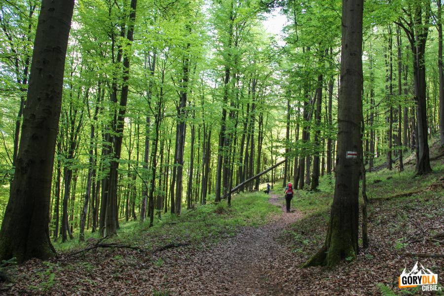 Droga do Pustelni św. Jana z Dukli (czerwony szlak z Chyrowej)