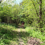 Trasa czerwonego szlaku na Grzywacką Górę